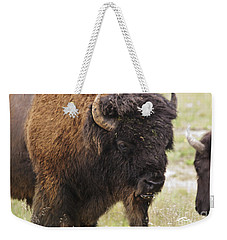 Weekender Tote Bag featuring the photograph Bison From Yellowstone by Belinda Greb