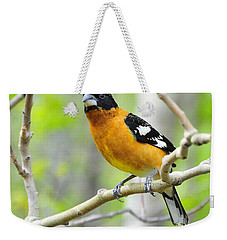 Blach-headed Grosbeak Weekender Tote Bag