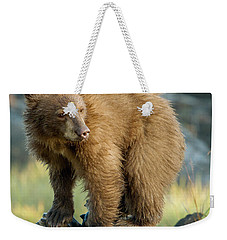 Weekender Tote Bag featuring the photograph Black Bear by Doug Herr