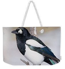 Black-billed Magpie Weekender Tote Bag