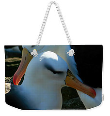 Weekender Tote Bag featuring the photograph Black Browed Albatross Pair by Amanda Stadther