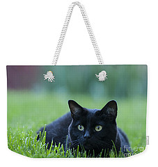 Black Cat Weekender Tote Bag by Juli Scalzi