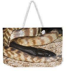Black-headed Python Weekender Tote Bag by William H. Mullins