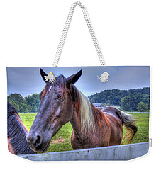 Black Horse At A Fence Weekender Tote Bag by Jonny D