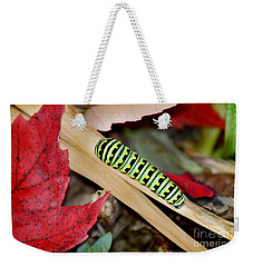 Black Swallowtail Butterfly Caterpillar Weekender Tote Bag