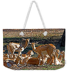 Blackbuck Female And Fawns Weekender Tote Bag by Miroslava Jurcik