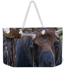 Weekender Tote Bag featuring the photograph Blood In His Eye by Jim Garrison