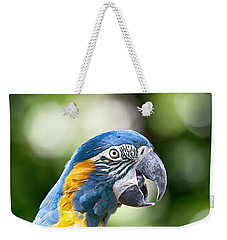 Blue And Gold Macaw V2 Weekender Tote Bag by Douglas Barnard