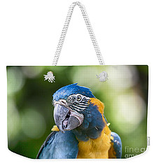 Blue And Gold Macaw V3 Weekender Tote Bag by Douglas Barnard