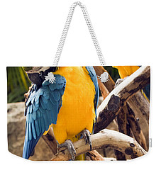 Blue And Yellow Macaw Pair Weekender Tote Bag