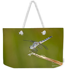 Weekender Tote Bag featuring the photograph Blue Dasher On The Edge by Bryan Keil