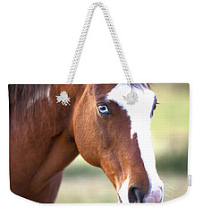 Weekender Tote Bag featuring the photograph Blue Eyes by Gordon Elwell