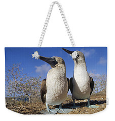 Blue-footed Booby Courting Couple Weekender Tote Bag by Tui De Roy