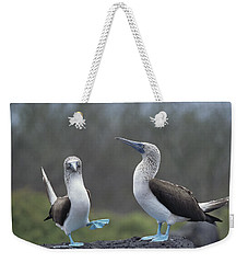 Blue-footed Booby Courtship Dance Weekender Tote Bag by Tui De Roy