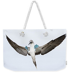 Blue-footed Booby Landing Galapagos Weekender Tote Bag by Tui De Roy