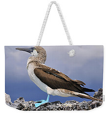 Blue-footed Booby Weekender Tote Bag by Tony Beck