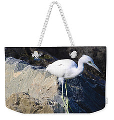 Weekender Tote Bag featuring the photograph Blue Heron Squared by Chris Thomas