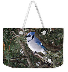 Weekender Tote Bag featuring the photograph Blue Jay In The Cedars by Brenda Brown