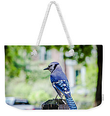 Weekender Tote Bag featuring the photograph Blue Jay by Sennie Pierson