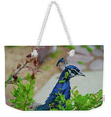 Weekender Tote Bag featuring the photograph Blue Peacock Green Plants by Jonah  Anderson