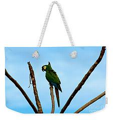 Blue-winged Macaw, Brazil Weekender Tote Bag