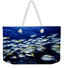 Bluelined Snappers And Yellowspot Emperors Weekender Tote Bag