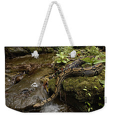 Boa Constrictor Crossing Stream Weekender Tote Bag by Pete Oxford