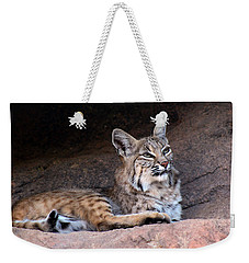 Weekender Tote Bag featuring the photograph Hmm What To Do by Elaine Malott