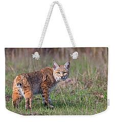 Bobcat Glance Weekender Tote Bag