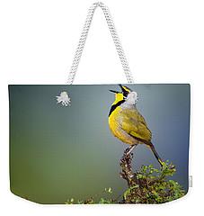 Bokmakierie Bird - Telophorus Zeylonus Weekender Tote Bag