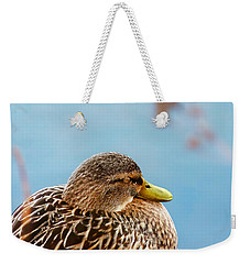 Weekender Tote Bag featuring the photograph Bonding In Winter - Female Mallard Duck - Diptych Part 2 by Menega Sabidussi