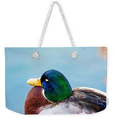 Weekender Tote Bag featuring the photograph Bonding In Winter - Male Mallard Duck - Diptych Part 1 by Menega Sabidussi
