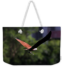 Brahminy Kite With Catch  Weekender Tote Bag