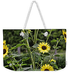 Weekender Tote Bag featuring the photograph Bright Sunflowers by Denise Romano
