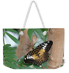 Weekender Tote Bag featuring the photograph Brown Clipper Butterfly #5 by Judy Whitton