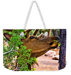Weekender Tote Bag featuring the photograph Browsing Red Deer In The Grand Canyon by Bob and Nadine Johnston