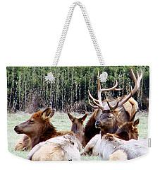 Bull Elk And His Girls 2 Weekender Tote Bag