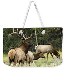 Bull Elk With His Harem Weekender Tote Bag by Bob Christopher