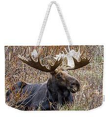 Bull Moose In Autumn Weekender Tote Bag by Jack Bell