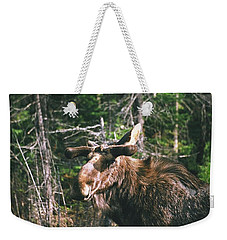Bull Moose In Spring Weekender Tote Bag by David Porteus