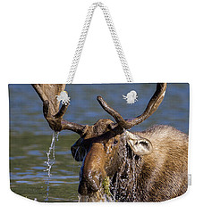 Bull Moose Sampling The Vegetation Weekender Tote Bag