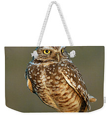 Burrowing Owl At Sunset Weekender Tote Bag