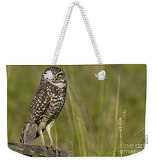 Burrowing Owl Stare Weekender Tote Bag by Meg Rousher