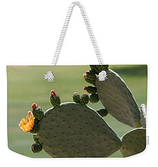 Weekender Tote Bag featuring the photograph Cactus Blooms In Spring by Marianne Campolongo