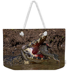 Caiman Vs Catfish 1 Weekender Tote Bag