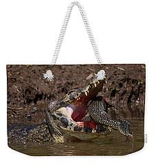 Caiman Vs Catfish 1 Weekender Tote Bag by David Beebe