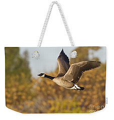 Weekender Tote Bag featuring the photograph Canada Goose In The Skies  by Bryan Keil