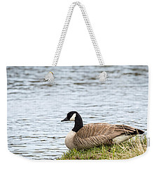 Weekender Tote Bag featuring the photograph Canada Goose by Michael Chatt
