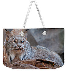 Weekender Tote Bag featuring the photograph Canada Lynx by Bianca Nadeau