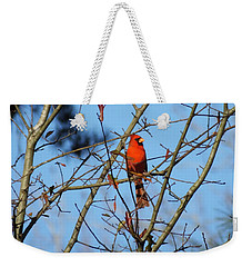 Cardinal At Burden Center Weekender Tote Bag by Lizi Beard-Ward